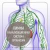 Лимфатическая система —