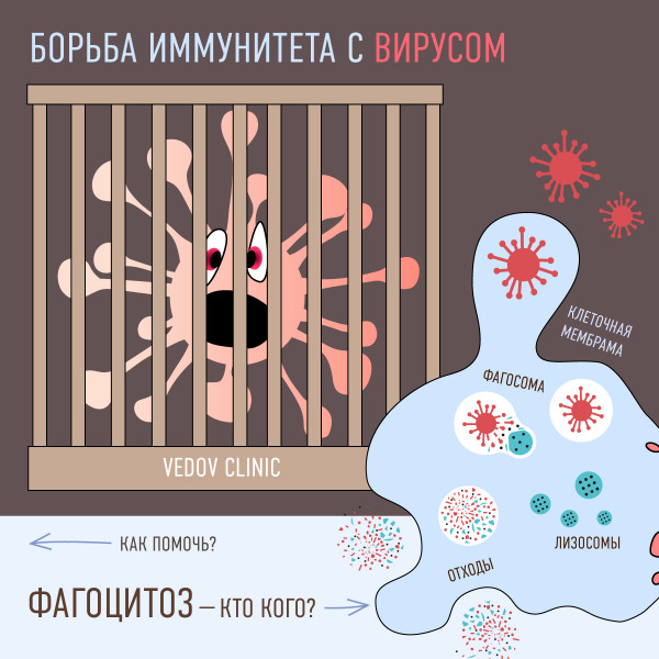 Как организм защищается от вирусов