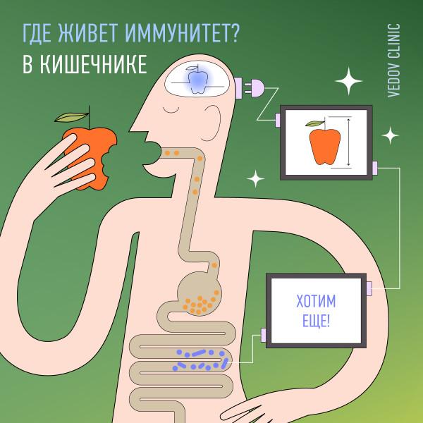 Микрофлора кишечника и иммунитет