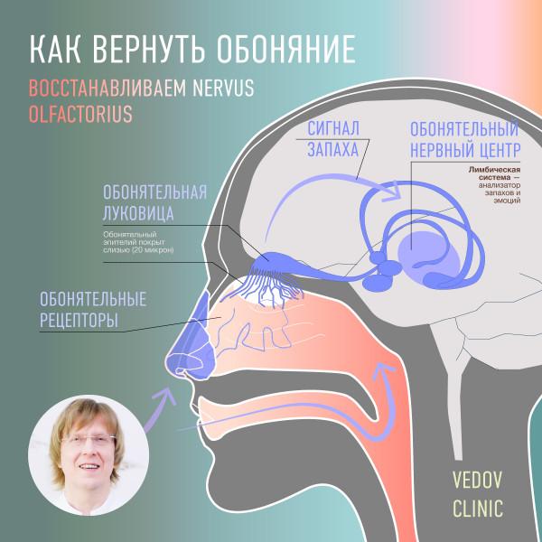 Как вернуть обоняние. Лечение асномии. Коронавирус